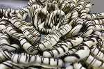 White Chocolate Dark Striped Pretzels - 3lbs
