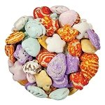 Chocolate Beach Seashells - 3lbs